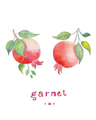 Garnet  hand drawn watercolor, on a white background. Vector illustration.
