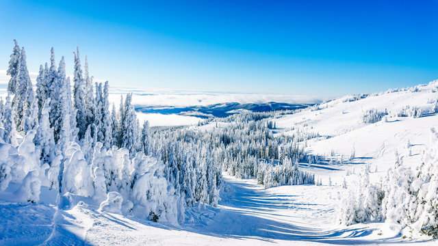 Trees fully covered in snow and ice in the high alpine mountains near the village of Sun Peaks in the Shuswap Highlands of central British Columbia, Canada
