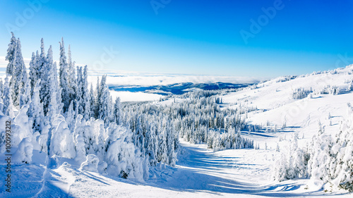 Wall mural Trees fully covered in snow and ice in the high alpine mountains near the village of Sun Peaks in the Shuswap Highlands of central British Columbia, Canada
