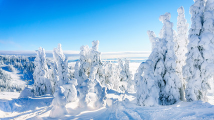 Wall Mural - Trees fully covered in snow and ice in the high alpine mountains near the village of Sun Peaks in the Shuswap Highlands of central British Columbia, Canada