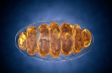 mitochondrion, mitochondrial. Medical concept . Inside human organism