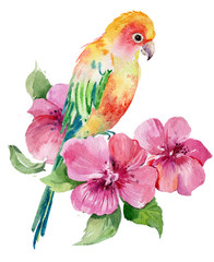 parrot bird .illustration watercolor