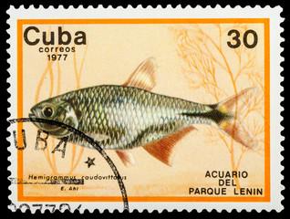 CUBA - CIRCA 1977: A stamp printed in Cuba shows aquarium fish, series, circa 1977