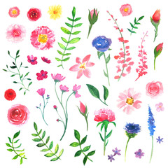 Vector Illustration of Colorful Floral Watercolor Design Elements
