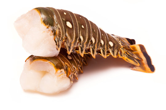 Raw Caribbean rock lobster tails isolated on a white studio back