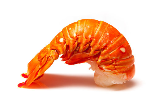 Cooked tropical Caribbean lobster (Panuliirus argus) or spiny lobster tail isolated on a white studio background