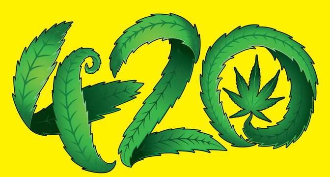 Green marijuana cannabis leaf 420 text vector illustration