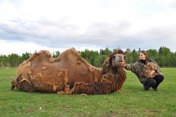 Girl gathers camel wool