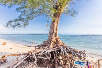 filaos sur plage Ermitage, Réunion, montée des eaux, réchauffement climatique