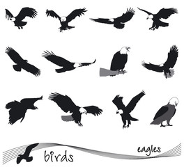 Vector collection of silhouettes of eagles
