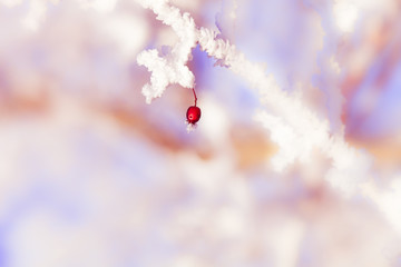 Berry in Winter / One single red berry at an frozen icy twig in winter with atmospheric poetic background