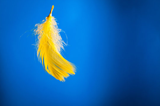 Yellow feather on blue background.