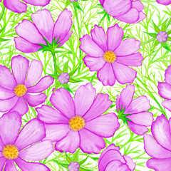 Rose watercolor flower pattern cosmos isolated on white background vector.