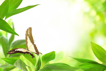 Spring or summer season abstract nature background with butterfly