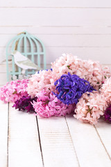 Background with fresh pink,  purple and violet  hyacinths on whi