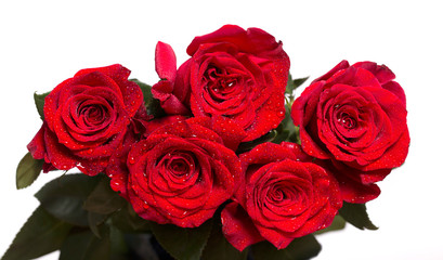 Five bright red roses with water drops on petals.
