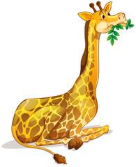 Cute giraffe chewing on leaves