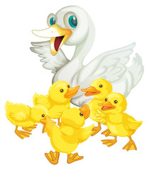 Mother duck and five ducklings