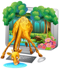 Computer screen with giraffe drinking water