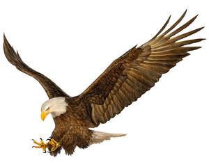 Bald eagle flying hand draw vector illustration.