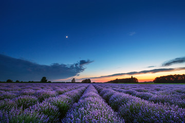 Beautiful landscape of lavender fields at sunset
