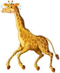 Giraffe running away from something