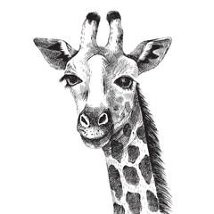 Fototapete - Hand drawn giraffe portrait