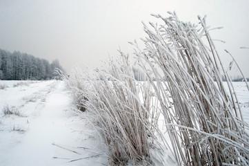 Obraz Oszroniona trawa przy drodze do lasu - fototapety do salonu