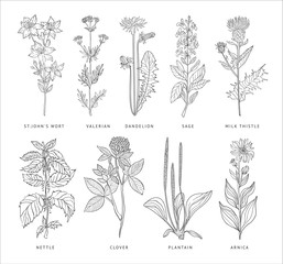 Medical Herbs Vector Set. Hannddrawn Style