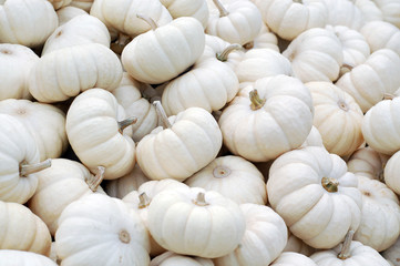 Small White Pumpkins