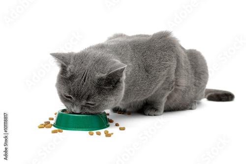 cat issues biting
