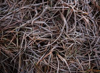 Обледеневшая трава с искрящимися снежными кристалами. Текстура зимнего газона.
