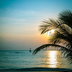 Silhouette of palm tree with beatuful sunset on koh pangan