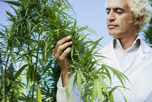 an analysis of the hemp plants beneficial factors in medical research Medical marijuana research by john hudak, phd and grace wallack introduction t (dea), on eight key factors to determine if there is a scientifically.