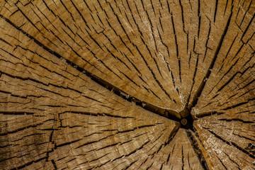 Linien und Strukturen im Baumstamm