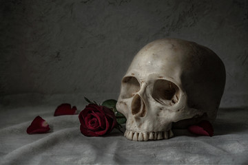 Still life painting photography with human skull and roses