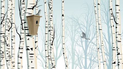 Horizontal illustration of birch trunks forest with birdhouse.