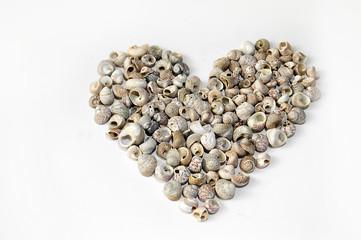 Heart made of seashells