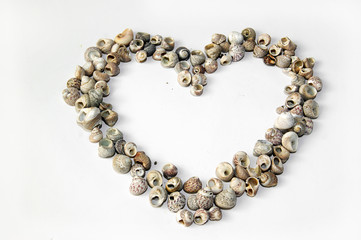 The contour of the heart made of shells