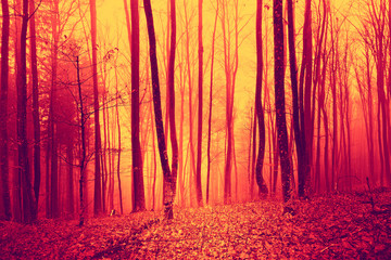 Wall Mural - Fire red saturated foggy forest background. Oversaturated yellow red forest trees background.
