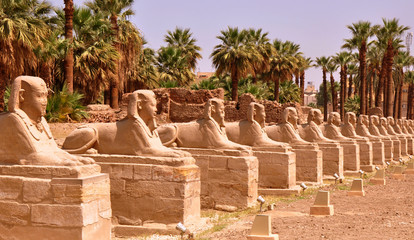 Amun Tempel von Luxor