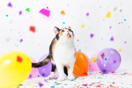 Katze feiert eine Party