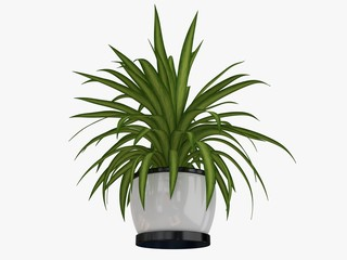 Beautiful small plant in pot
