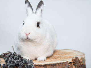 White rabbit and willow on a wooden background
