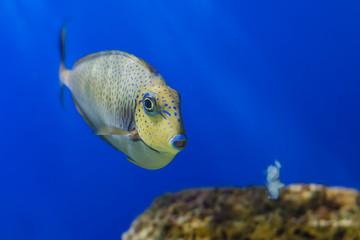 Exotic Tropical coral fish environment of the aquarium