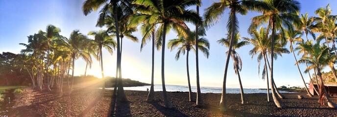 palms beach panorama