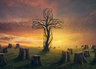 Cross and stumps