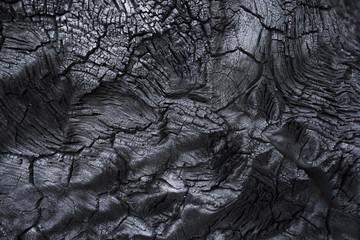 Poster Firewood texture Burnt driftwood stump