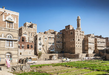 urban vegetable garden in sanaa city yemen