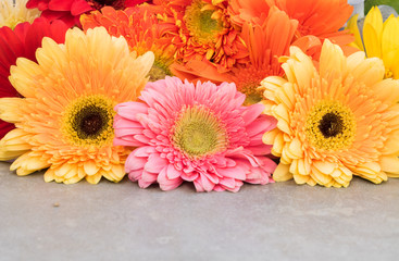 background of colorful flowers. Closeup.